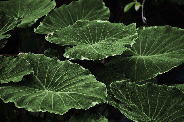 leaf-leaves-colorful